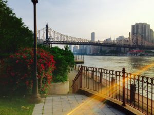 Roosevelt Island – The best place to elope in New York _01 w